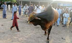 Cattle market sales yet to pick up