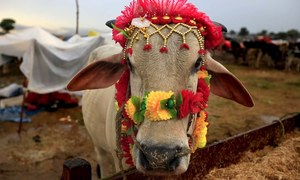 Pakistanis gear up for Eidul Azha festivities