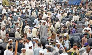 No check on illegal cattle markets in Peshawar
