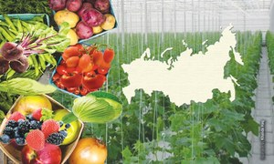 Eyeing Russia's farm market