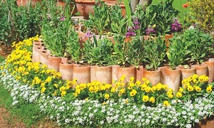 Gardening: Out with lawns