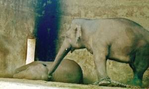 Activists protest Kaavan's confinement