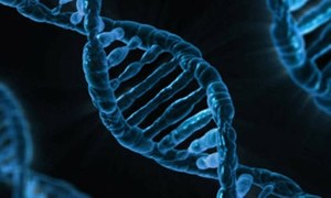 Designer babies: UN panel warns against 'editing human DNA'