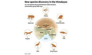 Over 200 new species found in Himalayas