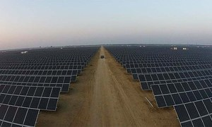 Solar Park project: Cholistan's precious trees being illegally sold