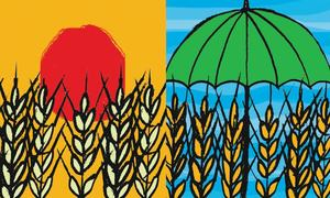 Vicious agri cycle