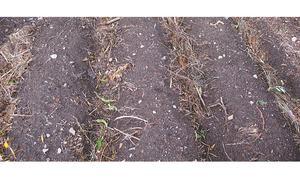 Soil rescue