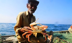 A Karachi fisherman's tale — In search of lobsters and livelihood
