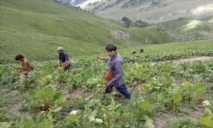 Environment: Plant poachers