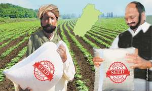 Distribution of cost-free certified seeds in Punjab