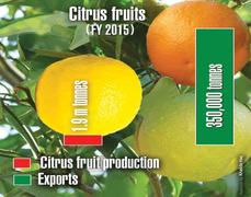Outlook for export  of citrus fruits