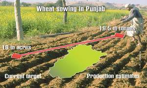 Punjab targets more wheat output with less acreage