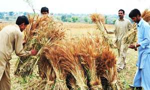 '12pc small farmers produce 80pc of world food'