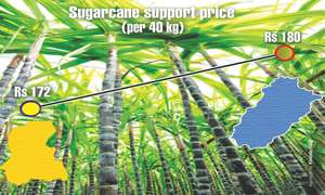 Sindh's irrational sugarcane pricing policy
