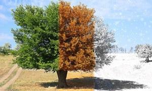 موسمی تبدیلی ہوتی ہے دماغ پر اثرانداز