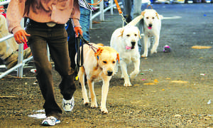 Dog day afternoon: The growing popularity of canine exhibitions