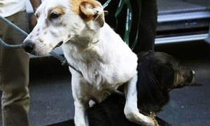 Clifton's war on stray dogs: An excuse for sadism?
