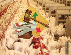 Anti-competitive practice in poultry industry