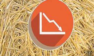 Declining fodder production in Punjab