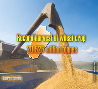 Punjab's record wheat harvest