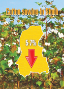 Costly inputs reduce cotton sowing