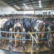 Dairy sector fears losing zero-rating status
