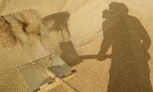 Sindh govt buying substandard wheat in bulk: millers