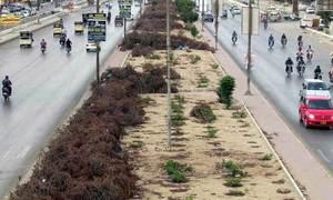 کراچی کے درخت ایک بار پھر تیزی سے کٹنے لگے