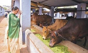 Mumbai court strikes down beef ban