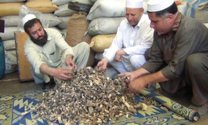 Mushroom dealers in Upper Dir suffer heavy losses