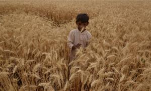 Punjab's fields of change