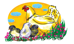 Story times: Three clever chicks