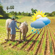 Extreme weather: outlook for agriculture