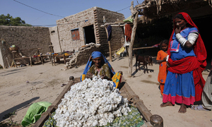 Pakistan's cotton imports to hold near record highs as output dwindles