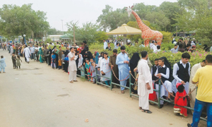 Eid brings no learning experience for zoo, Safari visitors