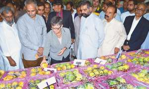 Outlook for mango exports