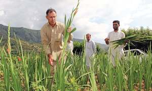 Farmers seek wider scope of fertiliser subsidy