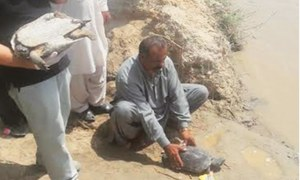 Over 700 seized freshwater turtles released into two water bodies