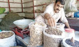 Mushroom traders in Dir turn to selling herbal plant