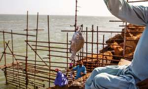 Coastal management: minimising biodiversity loss