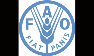 Better water management to boost cereal crop production: FAO
