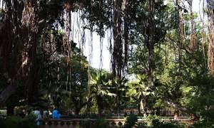 Turning a new leaf: Karachi's greenery faces new challenges