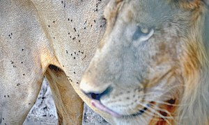 Experts warn of spread of disease in Karachi zoo animals