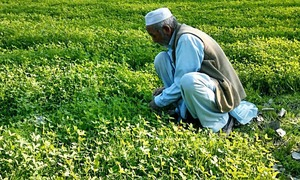 Pakistan must invest in agri sector for improving resilience, yield: report
