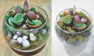 Go green with a terrarium!