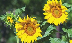 GARDENING: How to save time gardening in the summer