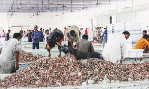 Cash-strapped fisheries authority faces crisis
