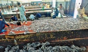 Crisis at Karachi fish harbour deepens