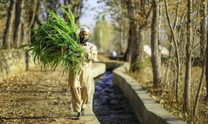 Climate change will force Pakistan's poor farmers out of work — unless they get help