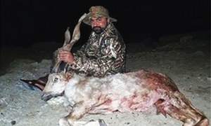 Minister faces criminal charges for hunting markhor